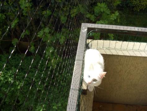 enclos de s curit pour chat paris enclos pour chat enclos pour chat enclos pour chat. Black Bedroom Furniture Sets. Home Design Ideas