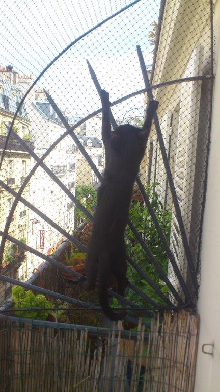 enclos de securit pour chat sur la terrasse pigalle. Black Bedroom Furniture Sets. Home Design Ideas